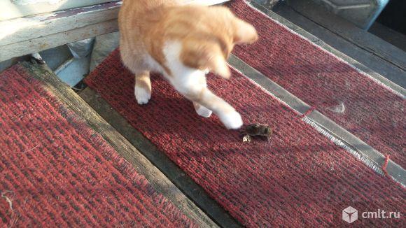 приснилось кошка ловит крысу