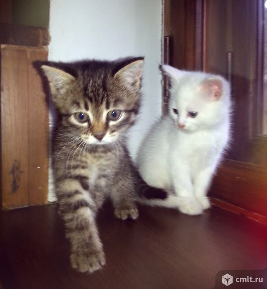 Котят в добрые руки воронеж